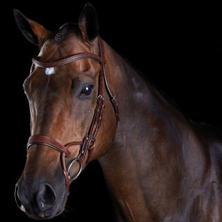 Collegiate ComFiTec Training Bridle
