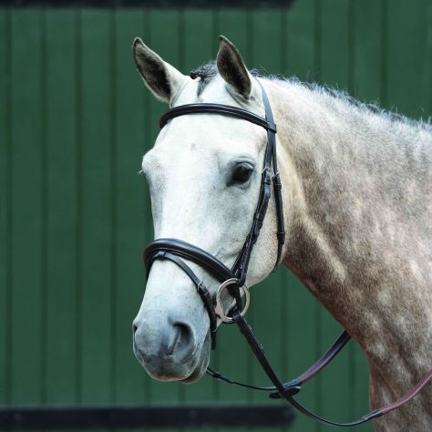 Collegiate Essential Padded Raised Flash Bridle