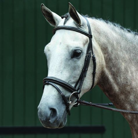 Collegiate Essential Padded Raised Fancy Stitched Flash Bridle