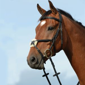 Collegiate Syntovia+ Padded Raised Figure 8 Bridle