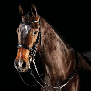 Collegiate ComFiTec Weymouth Bridle