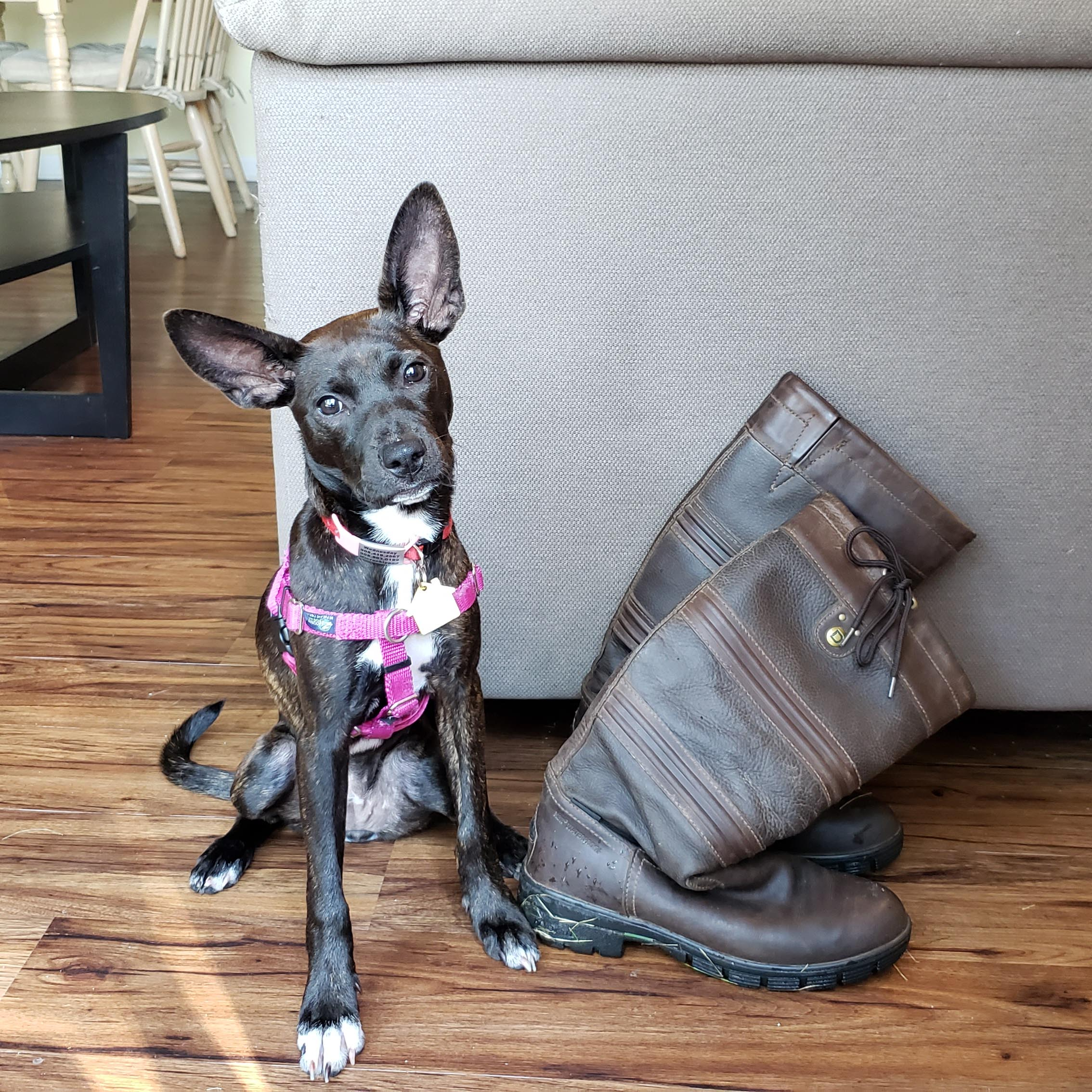 Customer Review: 300D Deluxe Dog Coat