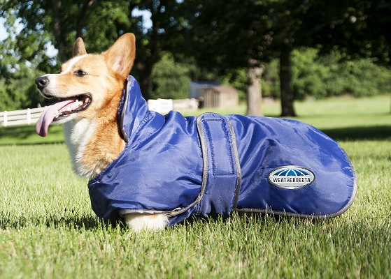WeatherBeeta Deluxe Windbreaker Dog Coat Review