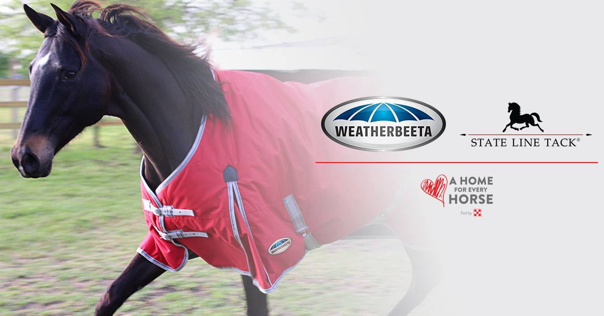 Racehorse Rescue Wins Big with Blanket Donation Program