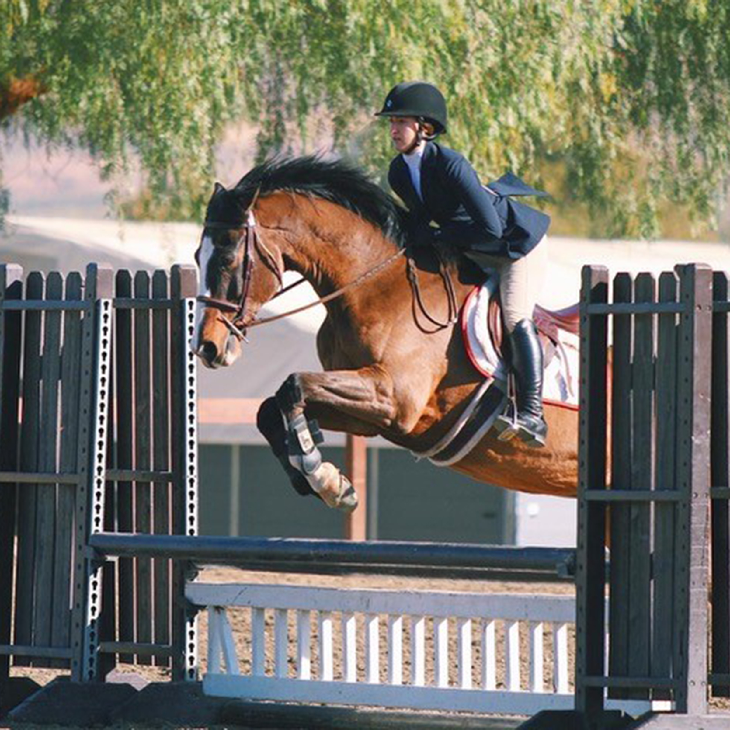 Equestrian Team Update from University of Southern California