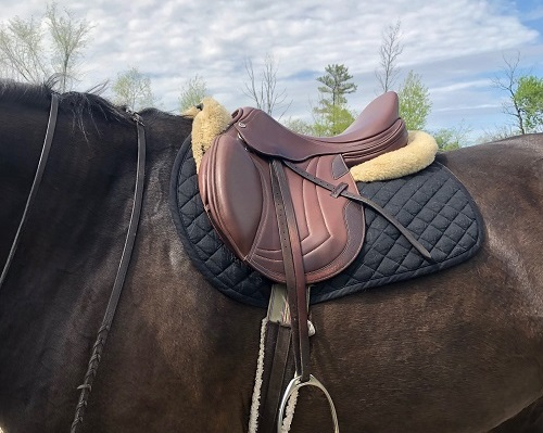 Saddle Review - Ithaca College Equestrian Team