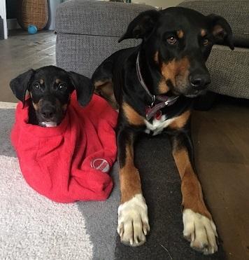 Bathtime Made Easy with a Dog Drying Bag
