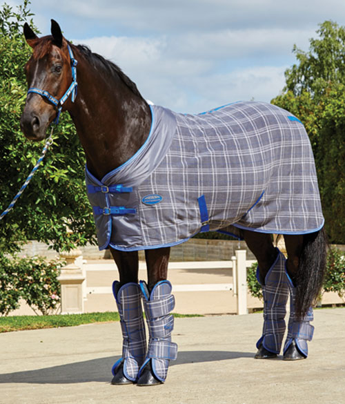Keeping Horses Comfortable During Winter Travel
