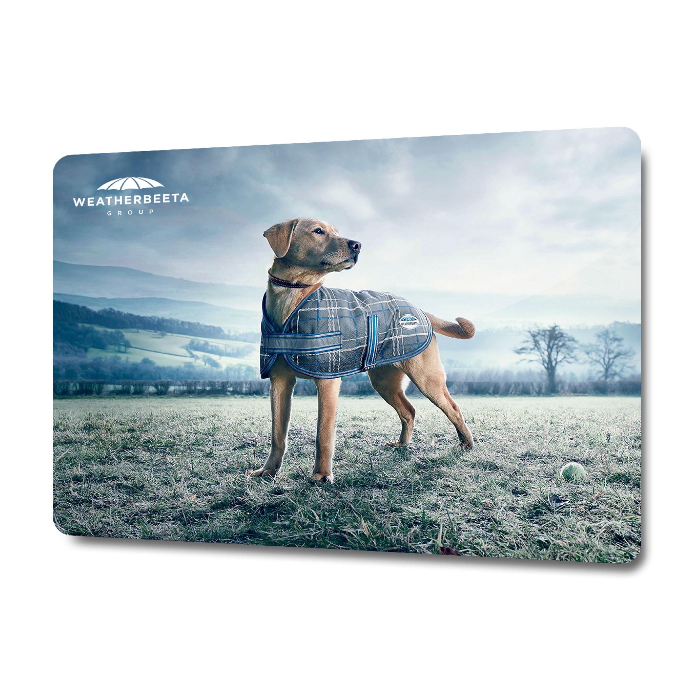 WeatherBeeta Dog 2