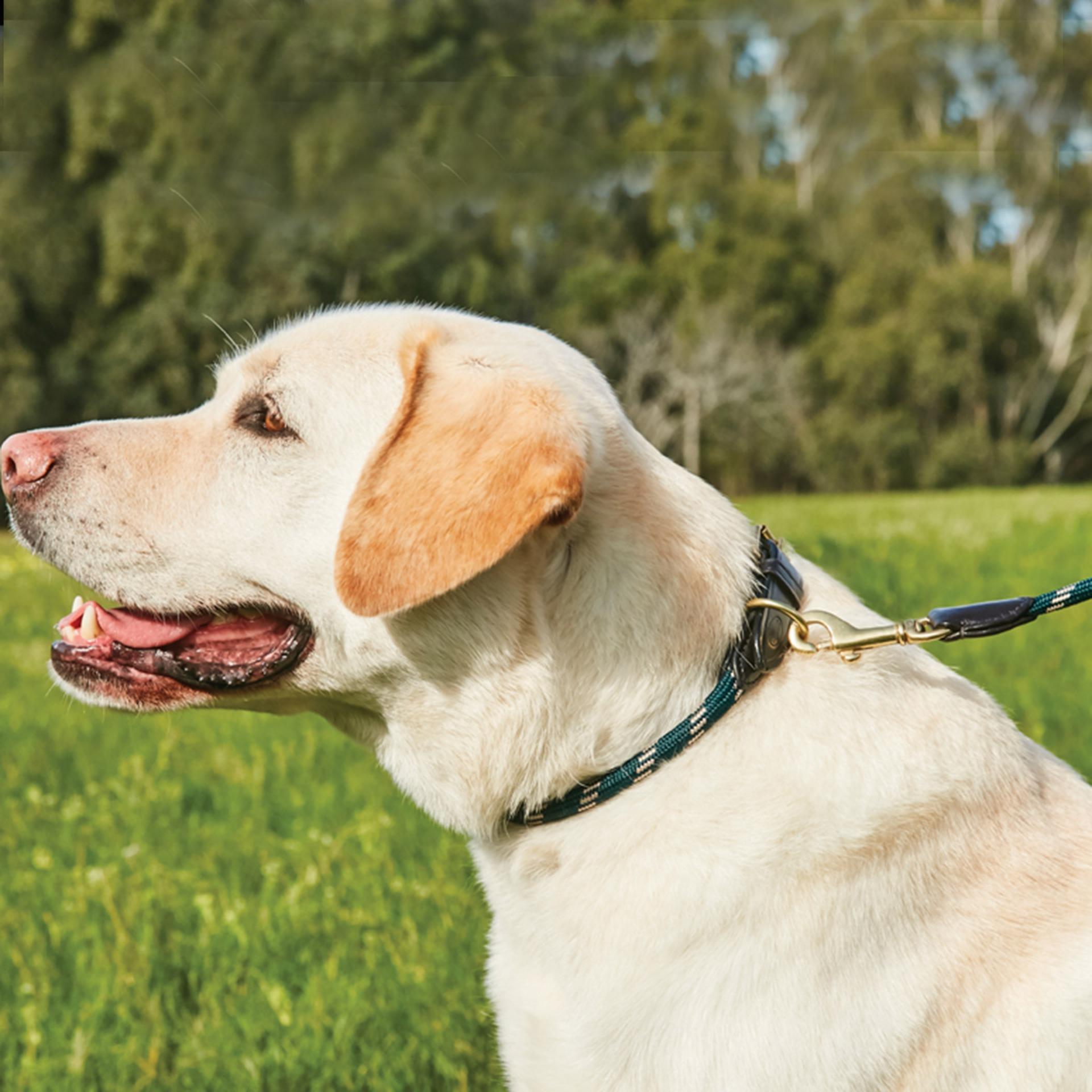 WeatherBeeta Rope Leather Dog Collar Size Chart