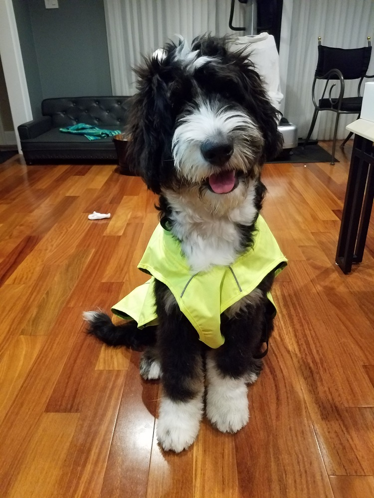 Bacchus in his WeatherBeeta rain coat
