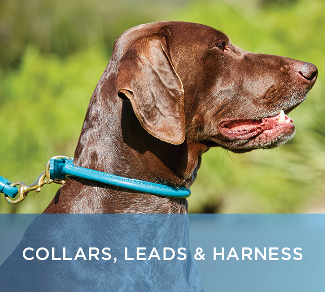 Shop Collars and Leashes