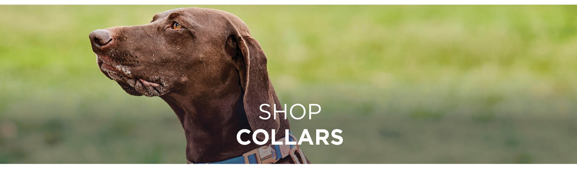 Shop WeatherBeeta Dog Collars