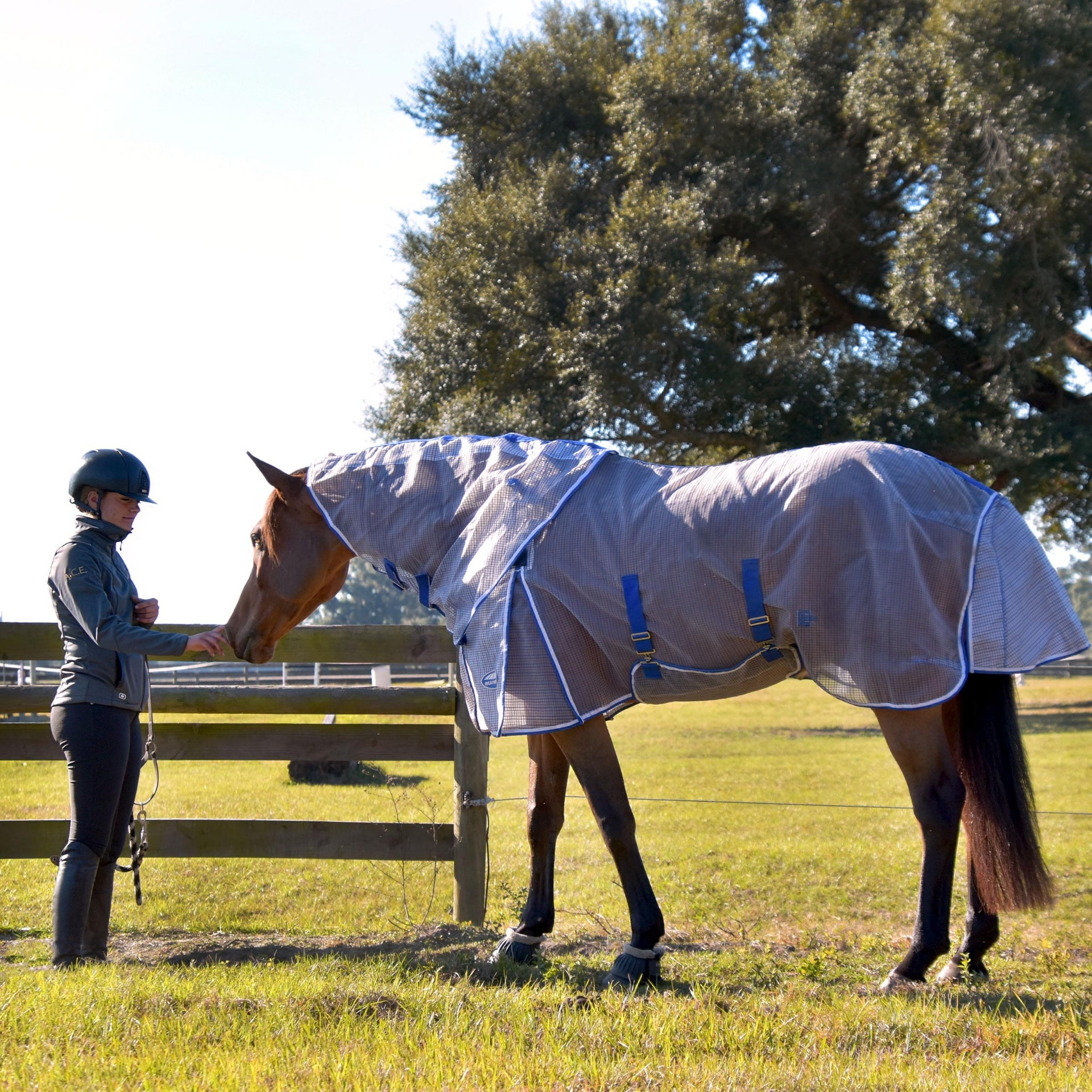 Horse wearing the the RipShield Plus Fly Sheet